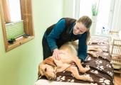 Wellness mit Hund in Gastein | Residenz Gruber