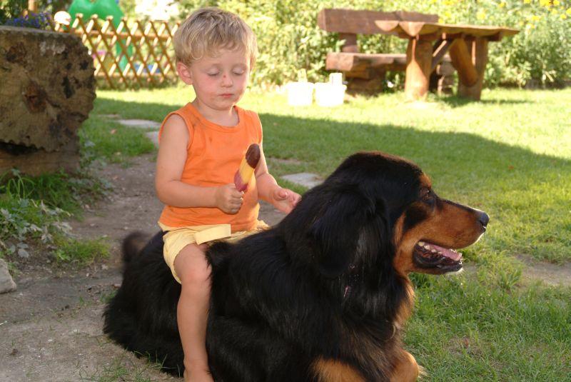 Hundedusche Garten : Könnte Ihr Hund entscheiden, würde er seinen ...