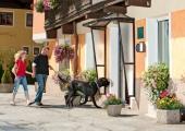 Urlaub mit Hund in Gastein in der Residenz Gruber